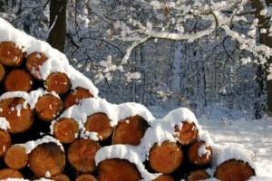 lemne romsilva db-600x400
